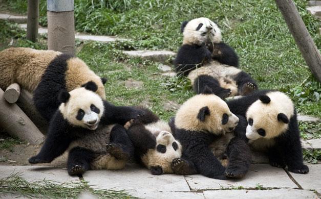 Bifengxia Panda Centre