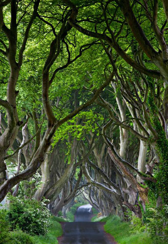 2009-11-04.The Dark Hedges Co Antri