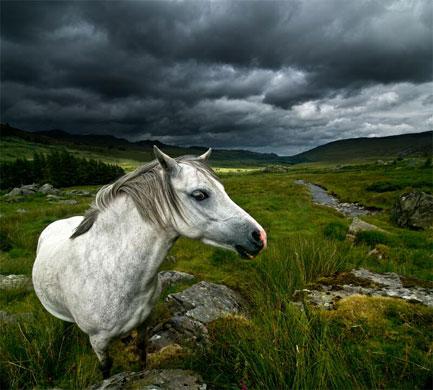 2009-11-04.The Horse Whisperer