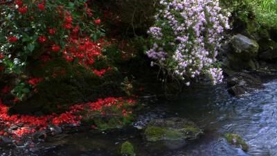 Bodnant Garden 是一座面积巨大,充满野趣的花园。