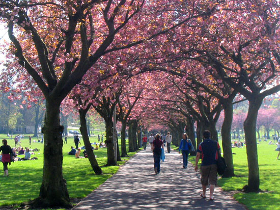 Meadow, Edinburgh