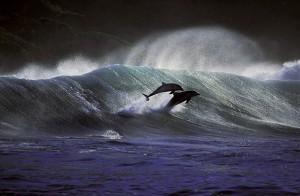 2010-02-19.Greg Huglin, surfing dophins