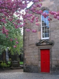 爱丁堡 Canongate Kirk 前的樱花
