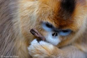 2010-10-21. Wildlife Pei Haijun