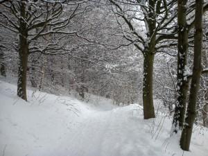 山坡小道完全被大雪覆盖了。