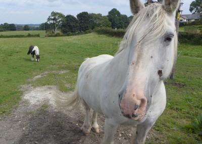 Nercwys 村子里的马
